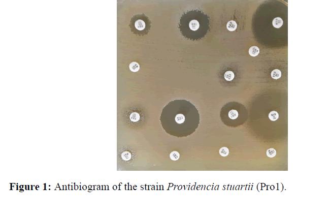 internalmedicine-Antibiogram-strain